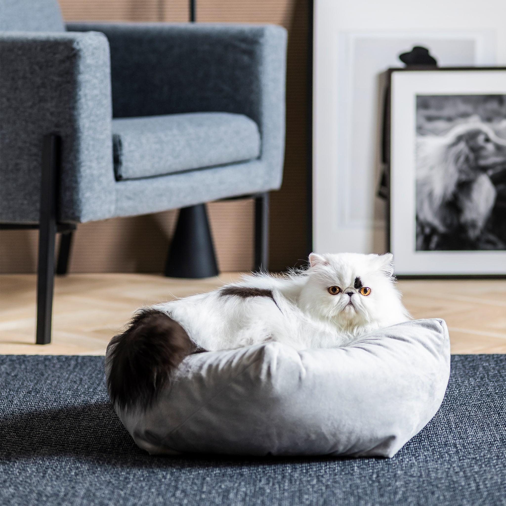玄關放有層架及掛放戶外衣物的衣帽架,一隻狗躺在鞋架旁的寵物床上。