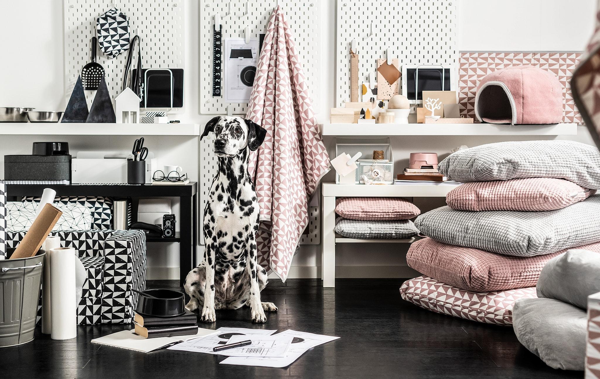 一隻坐直的斑點狗,身旁有顏色相襯的寵物傢具、布藝產品及配件。