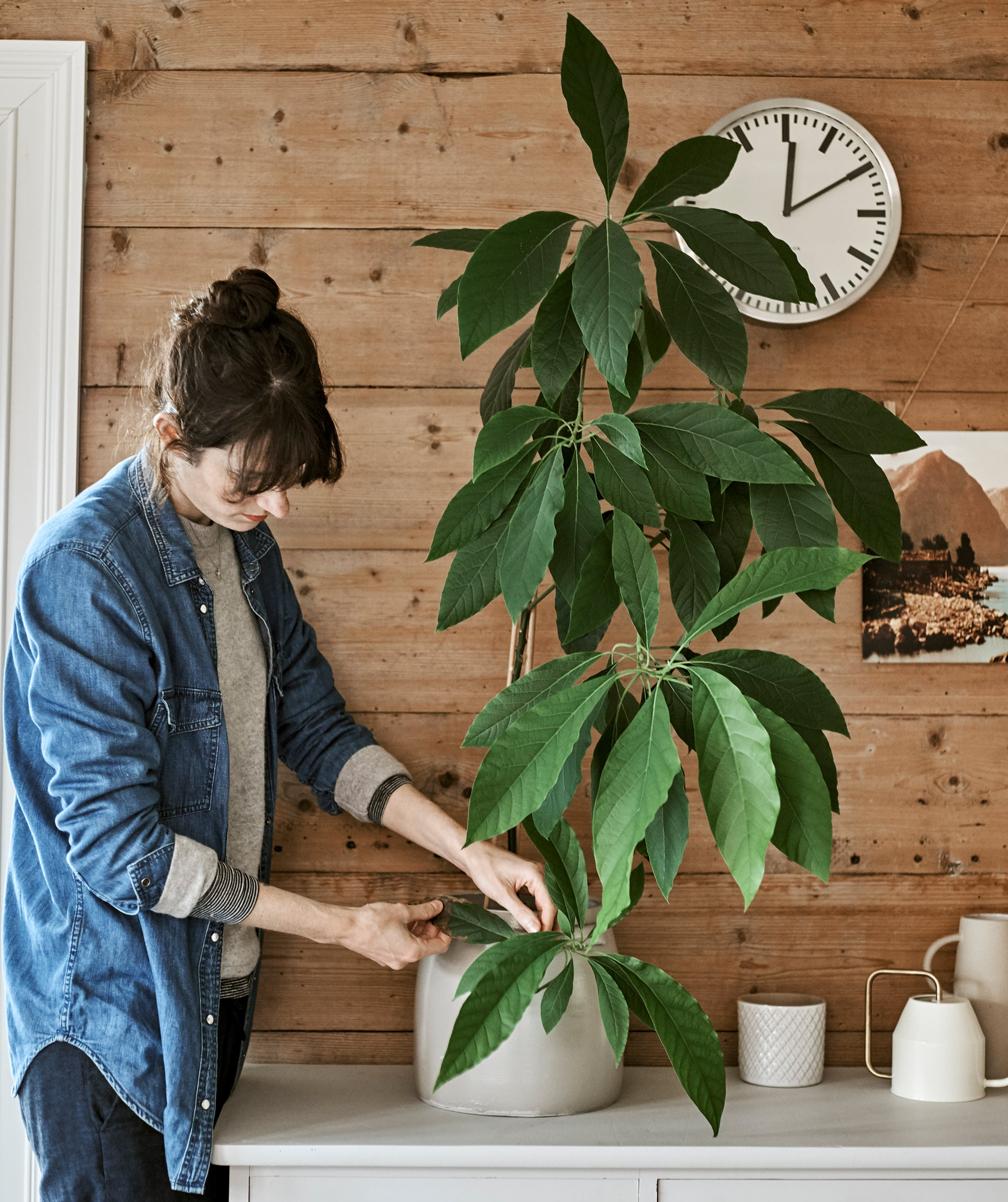 A woman checks a leafy houseplant in a white pot placed on top of a cabinet in front of a wood panelled wall with a clock.