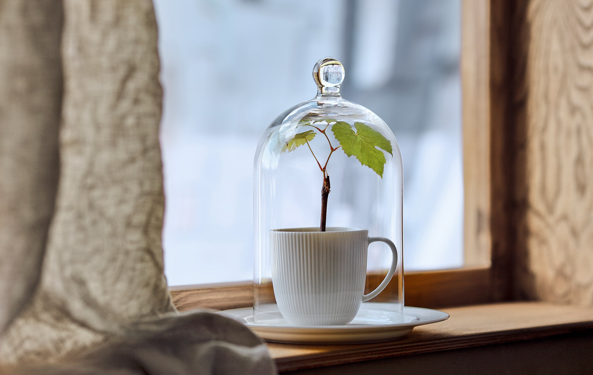 A MORGONTID glass dome over a tiny plant set in a tea mug placed in a shallow window sill, a wintery landscape behind it.