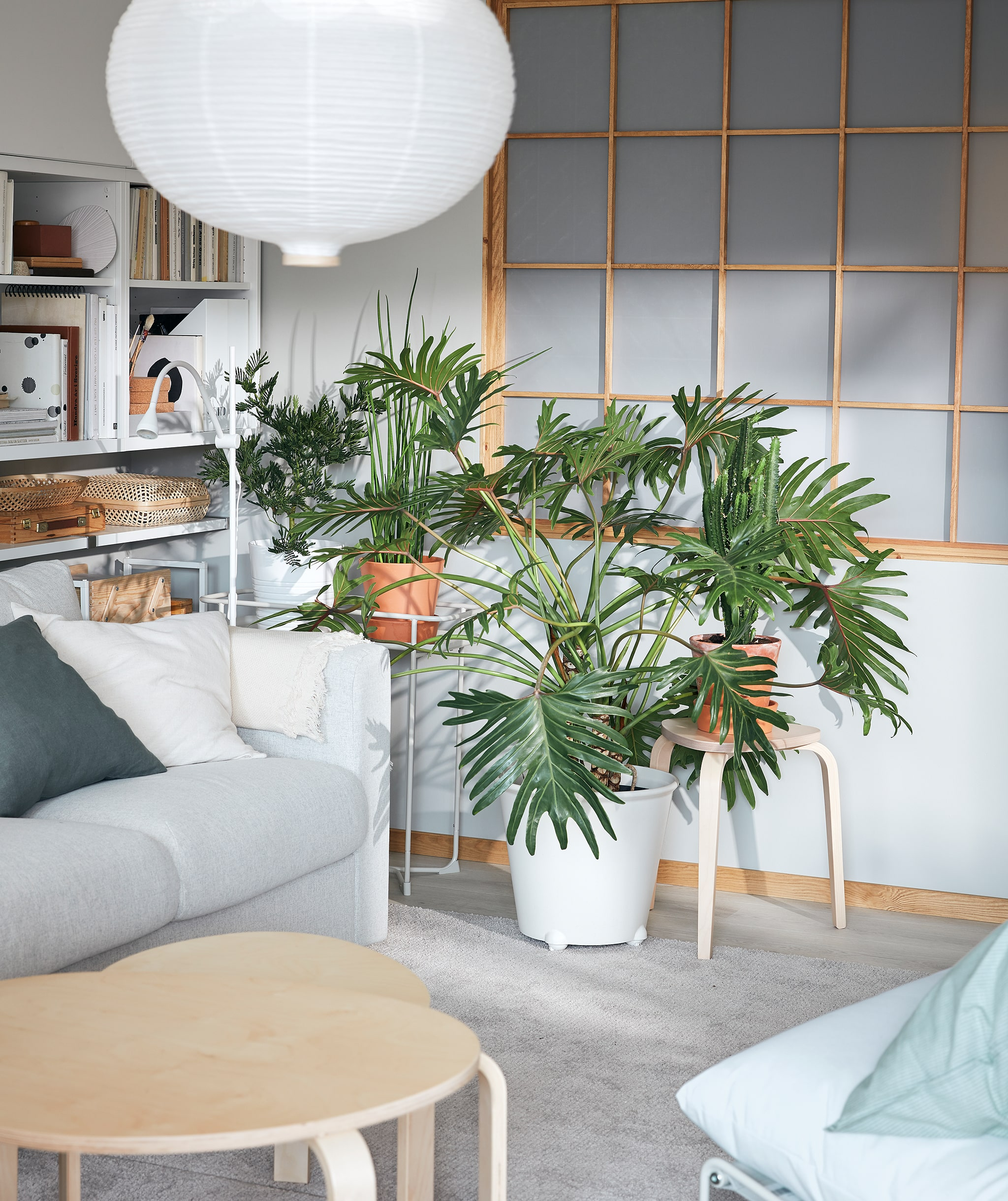 Corner of a living room with a group of sprawling plants. A large MONSTRERA plant is set in a IKEA PS FEJÖ wheeled plant pot.