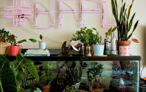 家居巡禮:打理室內花園的專家心得